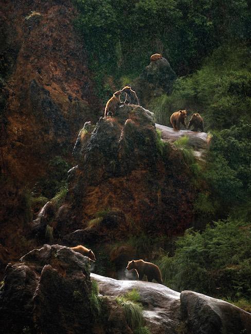 Beren in natuurpark Cabárceno in het Groene Spanje