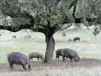 Het vreedzame Robledillo in de Sierra de Gata in Extremadura