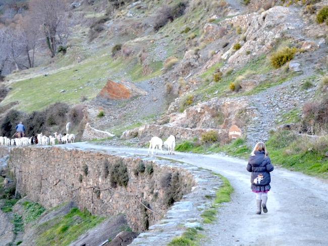 Een herder tijdens onze wandeling buiten Capileira in natuurgebied Las Alpujarras (Andalusië)