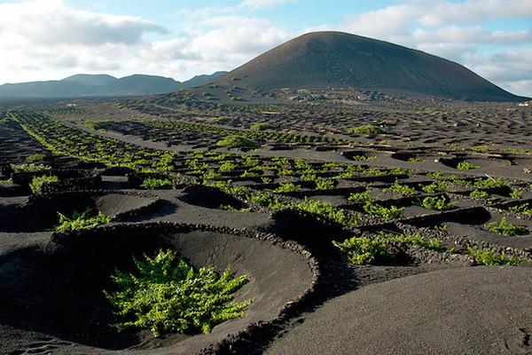Het vulkanische wijngebied La Geria op het Canarische eiland Lanzarote