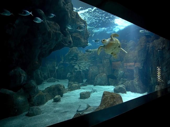 Het aquarium van Gijón in Asturië (Noord Spanje)