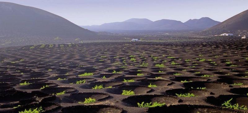 Wijngebied La Geria op het Canarische eiland Lanzarote