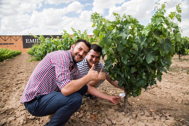 Heel wat beroemdheden hebben al een druivenstruik geadopteerd bij Bodega Emilio Moro in Castillië en Leon