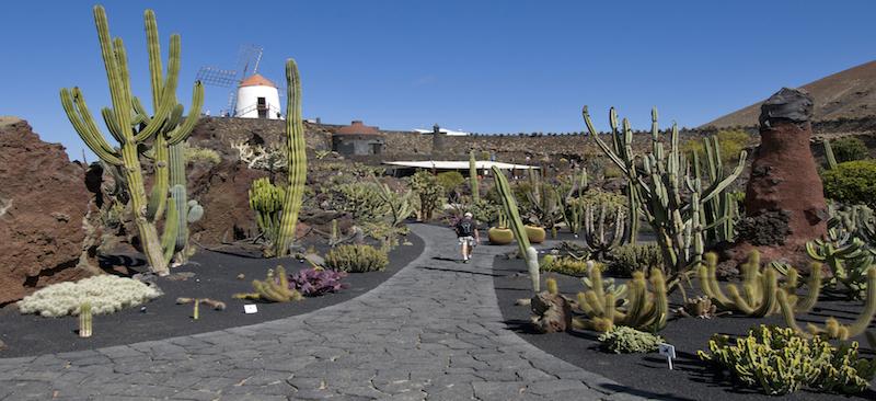 De cactus tuin op het Canarische eiland Lanzarote van kunstenaar Manrique