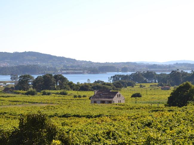 Wijngebied Rias Baixas in Galicië (Noord Spanje)