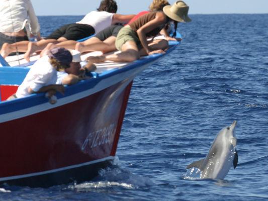 Excursie dolfijnen kijken op La Gomera (Canarische Eilanden)