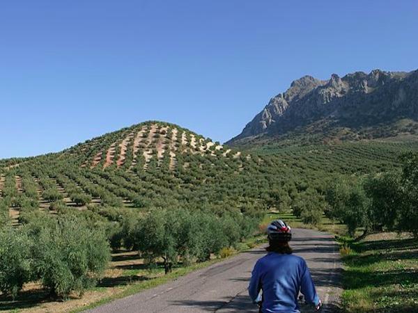Fietsen langs olijfbomen in Andalusië