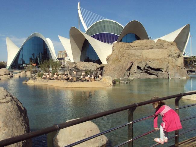 Dieren bewonderen in het Oceanográfico in de stad der Kunsten en Wetenschappen in Valencia