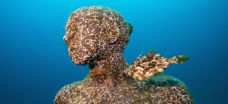 De onderwaterbeelden van Taylor worden kunstmatige riffen voor flora en fauna