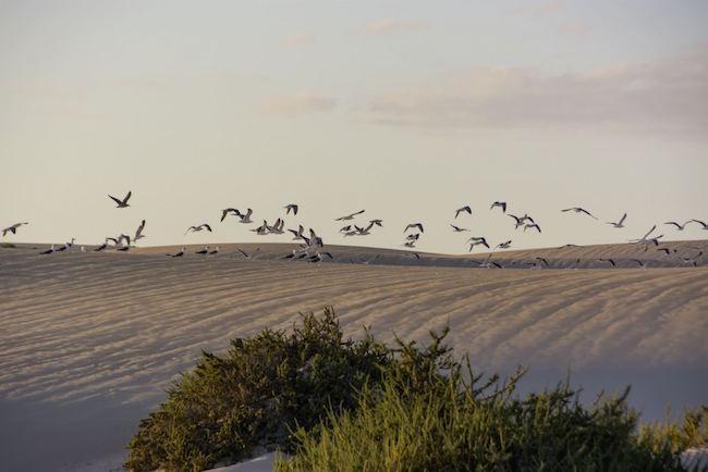 Dunas de Corralejo in natuurpark Corralejo op Fuerteventura (Canarische eilanden, Spanje)