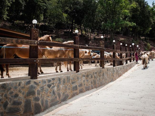 Paarden op de duurzame camping Manso Coguleras