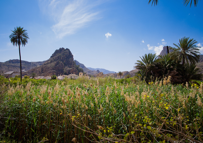De vruchtbare Ricote vallei in Murcia (Zuid Spanje)