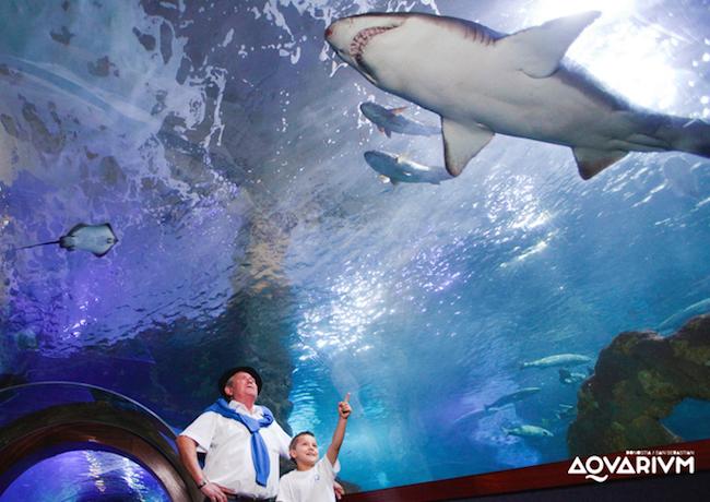 Glazen tunnel in het San Sebastian Aquarium in Noord Spanje
