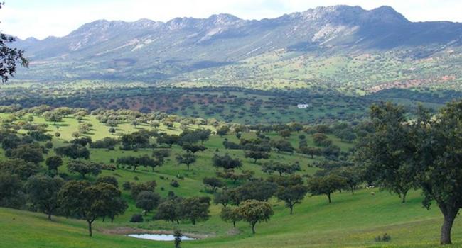 Uitgestrekte dehesas in de regio Extremadura (Midden Spanje)