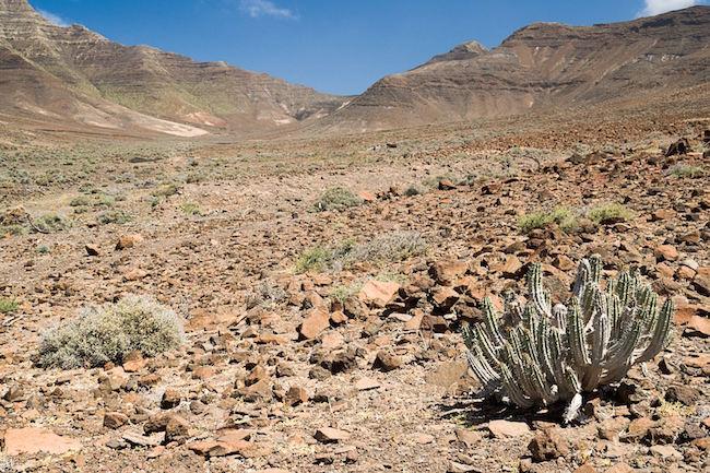 Een droog woestijnlandschap in de Gran Valle vallei op Fuerteventura (Spanje)