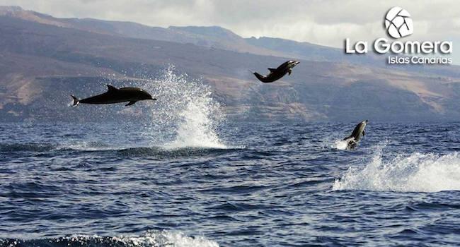 Bewonder dolfijnen tijdens een vakantie op La Gomera