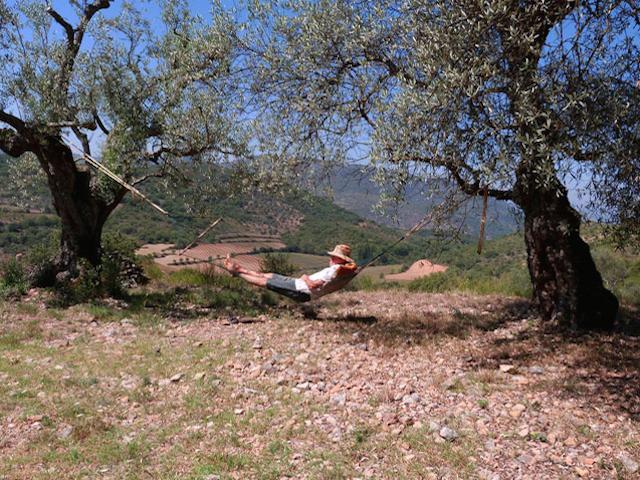 Volkomen privacy en rust rondom retraite huisje Olivar Cottage in Aragon